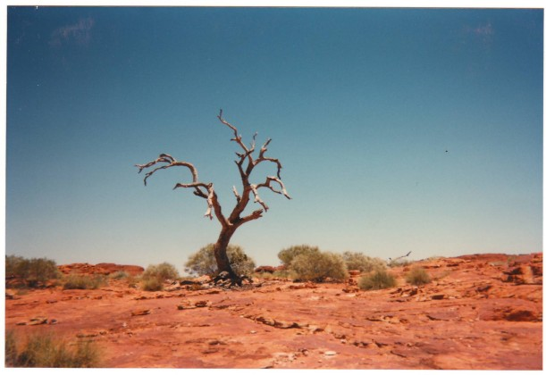 I took this photo on the edge of the Nullarbor Plain with a disposable camera.